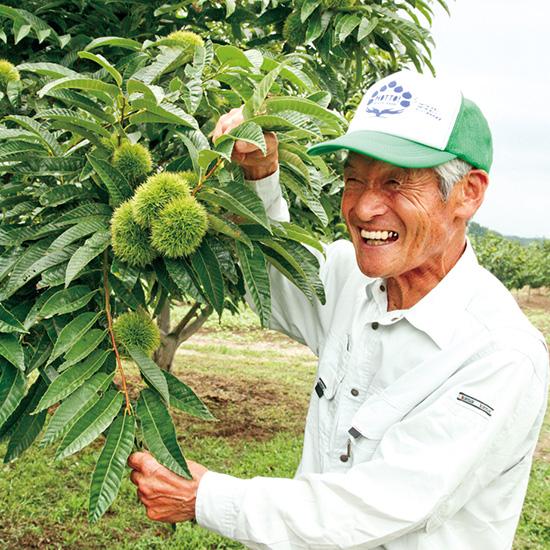信州伊那栗栽培農家