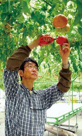 唐沢トマト工房代表 唐澤金実さん
