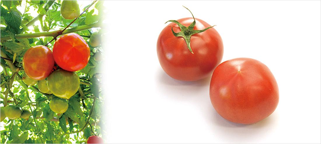 唐沢トマト工房さんイメージ